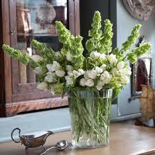 Bells Of Ireland Flower Seasonal Cut Flowers Ideal Home