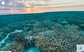 Coral Reef Map Of The World by Google U0027s Underwater Maps Show Coral Reefs Stunning Sea Life Views