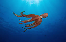 does an octopus have a soul this author thinks so