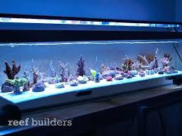 best lighting for corals aquarium leds aquarium leds uk sportymom me