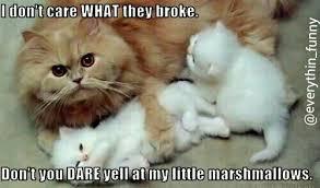 Funny Kitten Meme - funny image 3222416 by helena888 on favim com