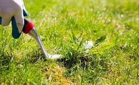 How To Get Rid Of Mosquitoes In Backyard by How To Get Rid Of Crabgrass The Easy Way