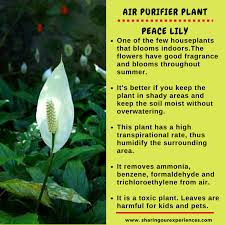 Fragrant Plants For Indoors 10 Best Air Purifying Plants For Your Home To Improve Air Quality