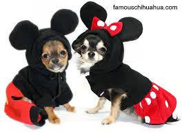 Contest Winning Halloween Costumes Halloween Costume Contest Winner Chihuahua Lady Gaga