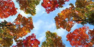 fall trees skypanels decorative ceiling light panels fluorescent