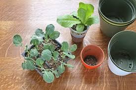 how to grow an indoor vegetable garden hunker