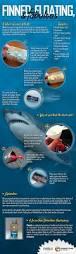106 best shark science images on pinterest shark craft shark