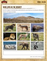 who lives in the desert u2013 fun habitat worksheet for 1st grade