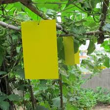 Homemade Fly Trap by Amazon Com Trapro Yellow Dual Sided Sticky Fly Traps For Plant