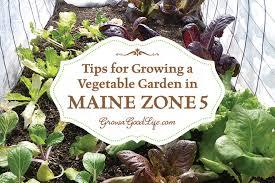 Garden Growing Zones - vegetable gardening tips for maine zone 5