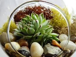 amazon succulents succulent terrarium ideas small garden ideas