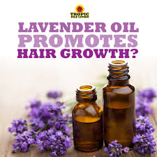 How To Use Jamaican Black Castor Oil For Hair Growth Lavender Oil Promotes Hair Growth Tropic Isle Living