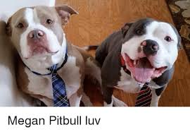 Megan Meme - megan pitbull luv megan meme on ballmemes com