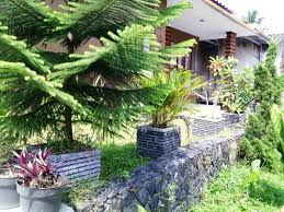 cool landscaping ideas around trees designs ideas and decor