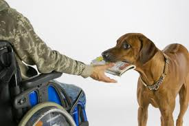 Leader Dogs For The Blind Jobs 10 Types Of Service Dogs And What They Do