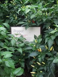 september 2011 indoor gardening my aerogarden and houseplant blog