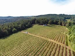 Pole Barns Oregon Vineyard For Sale In Cheshire Oregon By Jan Sohlman