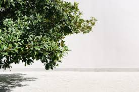 free photo tree green white shadow summer free image on