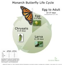monarch butterfly fall migration