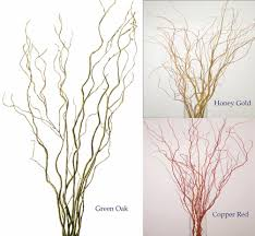 curly willow branches 5 to 6 ft curly willow pack of 8 to 10 stems