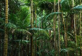free photo jungle rainforest lines free image pixabay