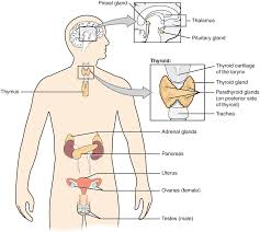 Anatomy And Physiology Labeling Anatomy And Physiology Skeletal System Labeling Human Anatomy Charts