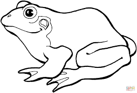 frog 8 coloring page free printable coloring pages