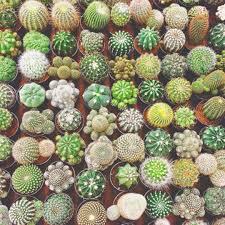 Cactus Garden Ideas Cactus Garden Ideas