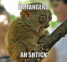 Ermagerd Meme - meme of the week ermahgerd animals