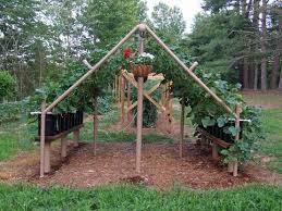 Vine Trellis Ideas 2059 Best Grape Growing Trellis Images On Pinterest Garden Ideas
