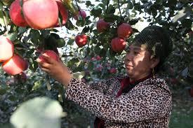free images apple woman fruit flower food harvest produce
