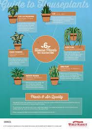 benefits of houseplants 6 houseplants for a healthier home world market