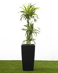 house plants home of indoor and office plants delivered across