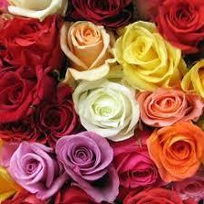 roses colors kroger