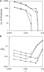 muller u0027s ratchet and the pattern of variation at a neutral locus