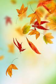 halloween background leaves 1001 best wallpaper images on pinterest wallpaper backgrounds
