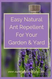 natural ant killer for garden
