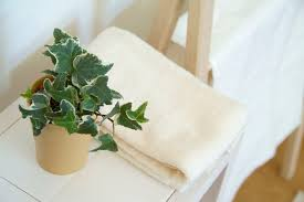 indoor plants that are dangerous to children u0026 pets