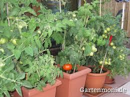 gem se pflanzen balkon gemüse und obst auf dem balkon ziehen gartenmoni altes wissen
