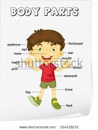 body parts stock images royalty free images u0026 vectors shutterstock