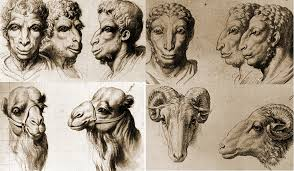 physiognomy the human face with animal qualities