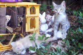 stray cat mama and her kittens turn a family u0027s backyard into their