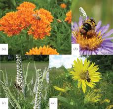 google images flower predicting plant attractiveness to pollinators with passive