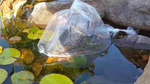 why are my pond fish hiding dreamscapeswatergardens com