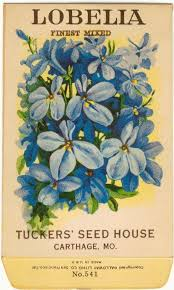 flower seed packets lobelia finest mixed vintage flower seed packet tuckers