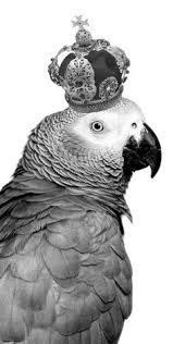 what are the best foods for your african grey parrot find out in