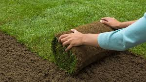 how much does grass sod cost prices u0026 installation