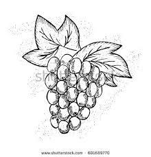hand drawn sketch vector illustration stock vector 733655419