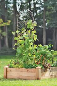 chicken wire plant trellis buy from gardener u0027s supply