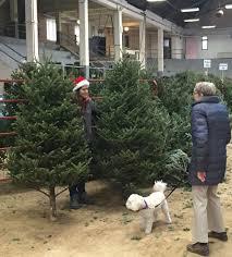christmas tree for sale decades cus christmas tree sale still fresh entertainment